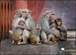 Monkey Family. Photo Rob te Riet